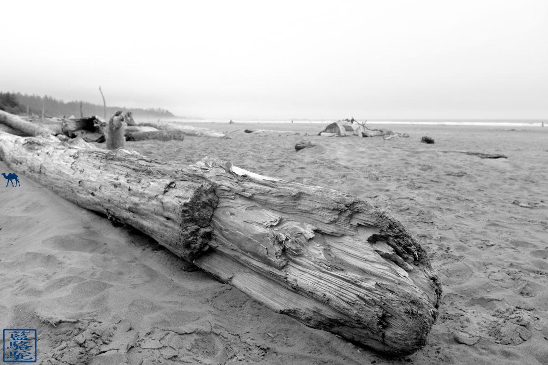 Le Chameau Bleu - Blog Voyage Canada Colombie Britannique -Long Beach Tofino