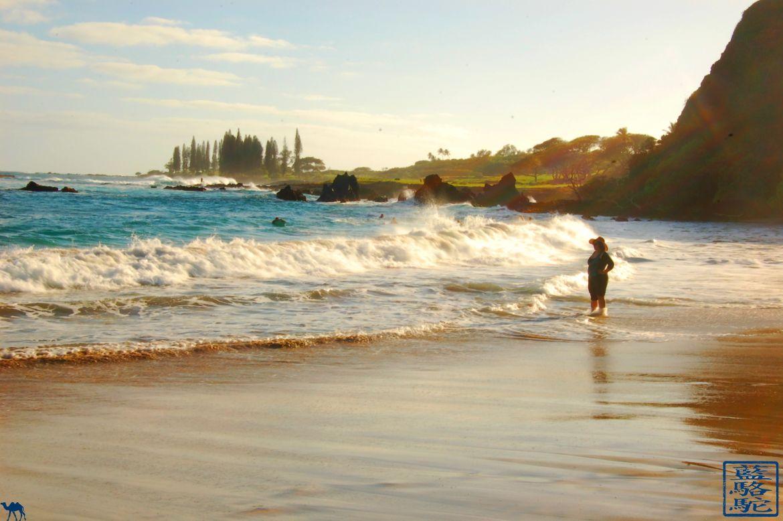 Le Chameau Bleu - Blog Voyage Hawaii -Vagues d'Hawaii