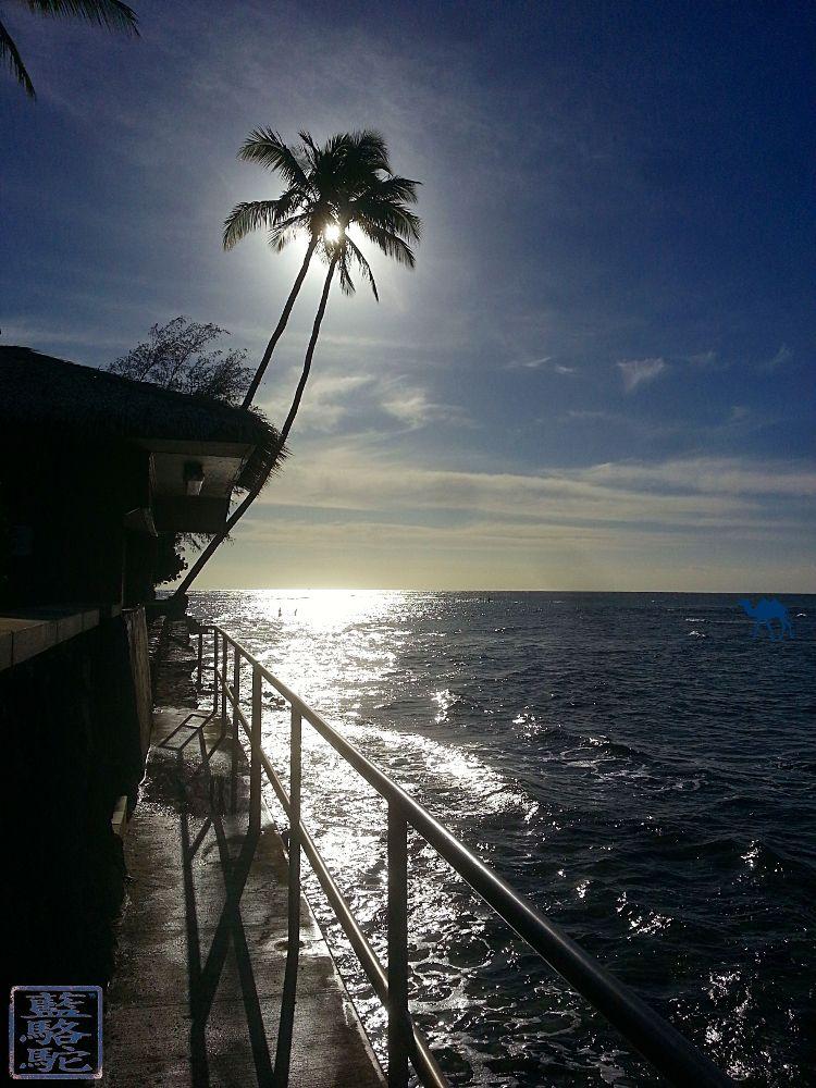 Le Chameau Bleu - Blog Voyage Hawaii - Instantanés d'Hawaii - OAHU En longeant la côte depuis Waikiki