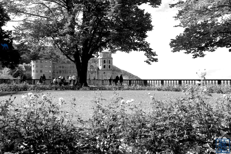 Le Chameau Bleu - Blog Voyage Heidelberg Allemagne - Hortus Palatinus - Chateau d'Heidelberg - Voyage en Allemagne