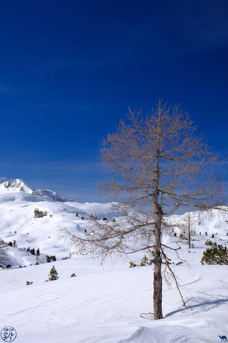 Le Chameau Bleu - Blog Voyage Autriche - Arbre du Dachstein Krippenstein