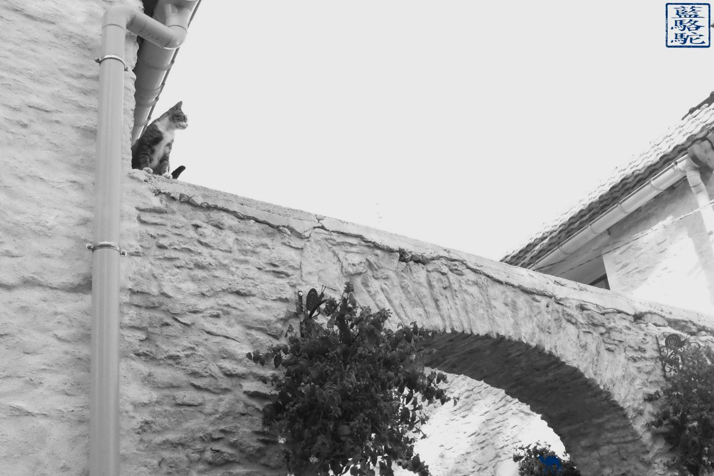Le Chameau Bleu - Blog Voyage Bourgogne Santenay - Chat de Santenay
