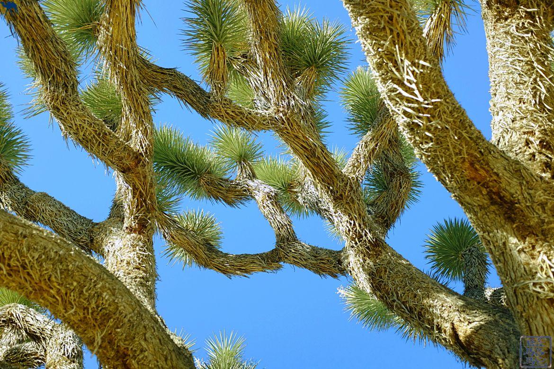 Le Chameau Bleu- Blog voyage - Californie du Sud-joshua tree