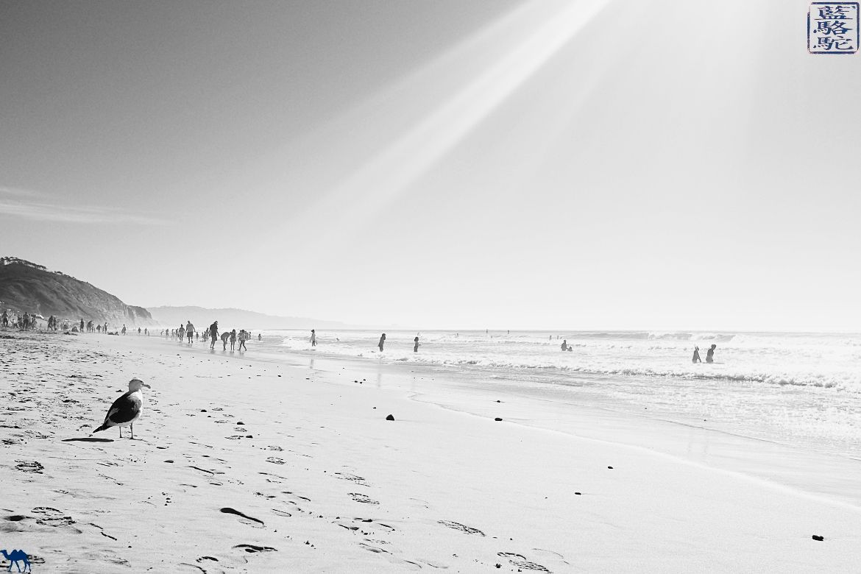 Le Chameau Bleu- Blog voyage - Californie du Sud-Mouette à Torrey Pines