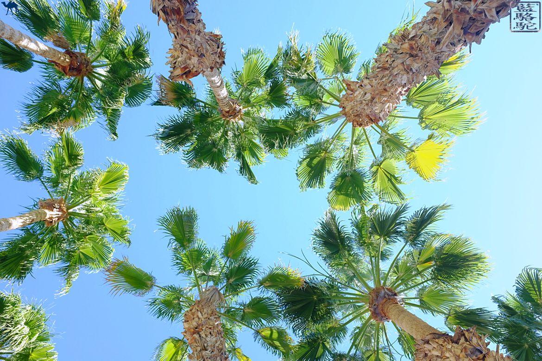 Le Chameau Bleu- Blog voyage - Californie du Sud-Palmiers de la Quinta