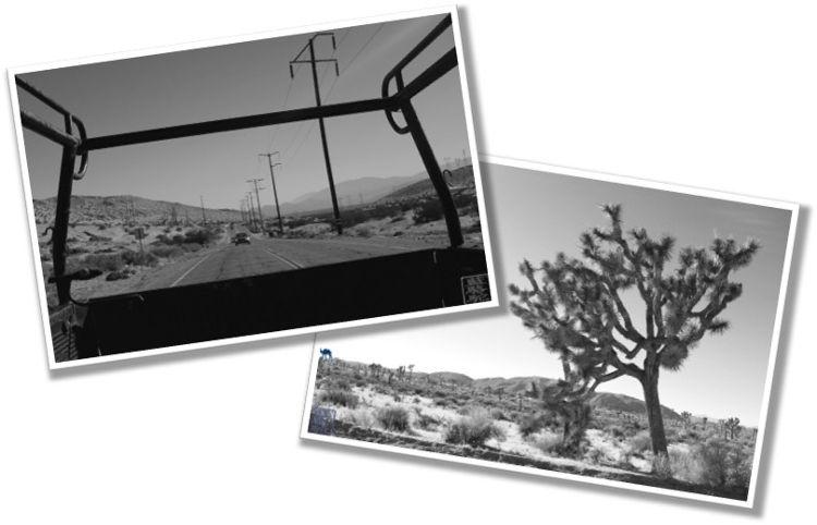 Le Chameau Bleu - Blog Voyage Etat Unis -Voyage en Californie du Sud du coté de Joshua Park