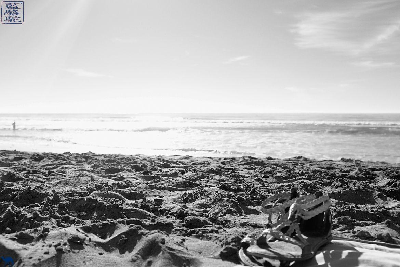 Le Chameau Bleu- Blog voyage - Californie du Sud-Torrey Pines Beach