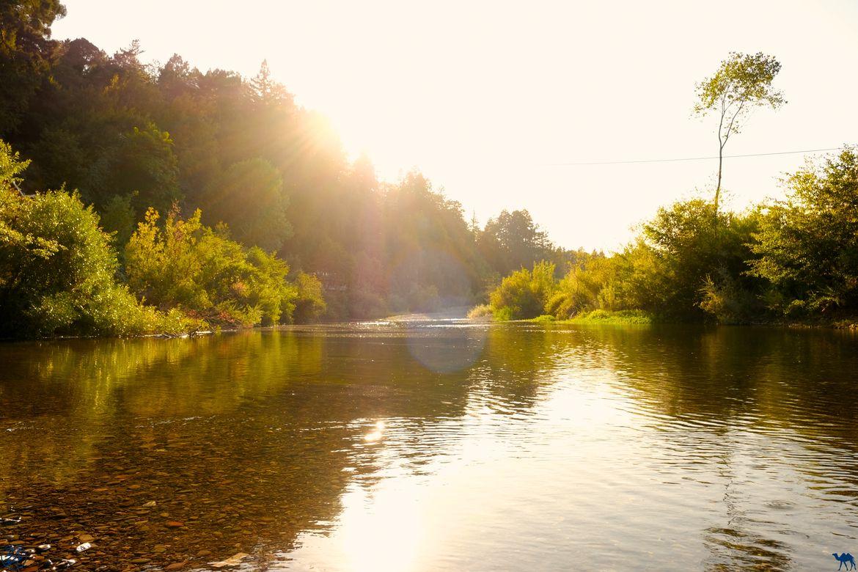 Le Chameau Bleu - Blog Voyage Californie -Russian River