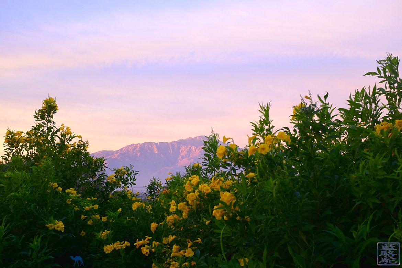 Le Chameau Bleu Blog Voyage Joshua Park - Roadtrip dans Joshua Park en Californie du Sud - The Spring