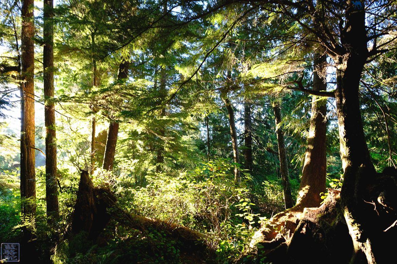 Le Chameau Bleu - Blog Voyage Tofino Ile de Vancouver - Toquin Trail Tofino Ile de Vancouver Canada