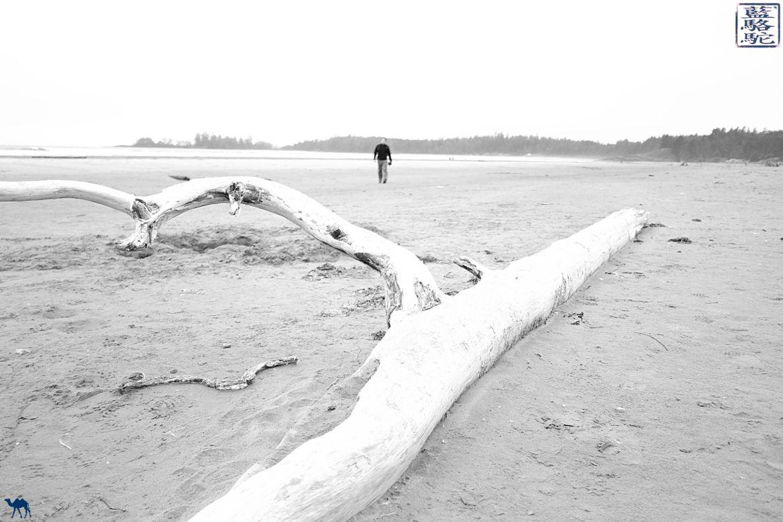 Le Chameau Bleu - Blog Voyage Tofino Ile de Vancouver -Long Beach Pacific Rim Tofino Canada