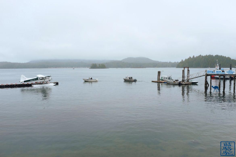 Le Chameau Bleu - Blog Voyage Tofino Canada - Paysage brumeux de Tofino - Canada