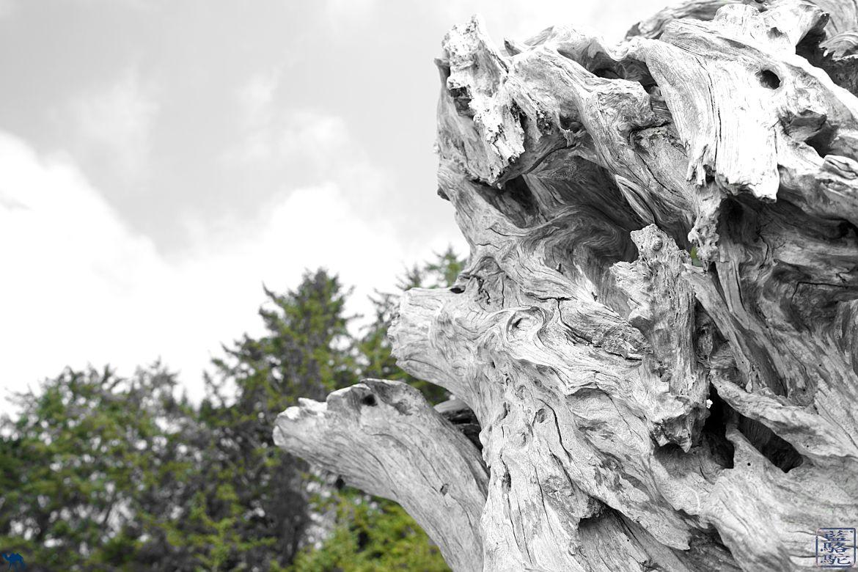 Le Chameau Bleu - Blog Voyage Tofino Ile de Vancouver - Sculpture Bois Flotté à Tofino sur l'ile de Victoria au Canada