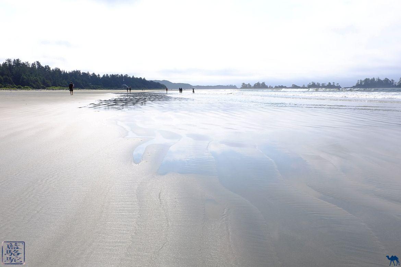 Le Chameau Bleu - Blog Voyage Tofino Canada - Photos à Plage de Tofino - Long Beach Ile de Vancouver Canada