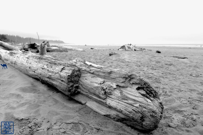 Le Chameau Bleu - Blog Voyage Tofino Canada - Bois Flotté de Long Beach à Torino Colombie Britannique
