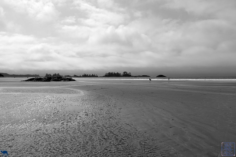 Le Chameau Bleu - Blog Voyage Tofino Canada - Plage de Tofino - Pacific Rim National Park Canada