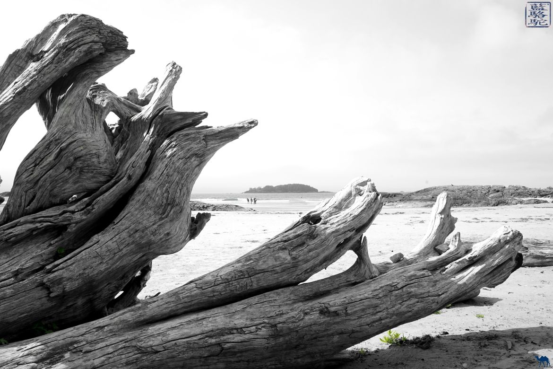 Le Chameau Bleu - Blog Voyage Tofino Canada - Bois Flotté à Tofino sur l'ile de Vancouver au Canada