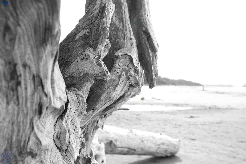 Le Chameau Bleu - Blog Voyage Tofino Ile de Vancouver -Bois flotté Long Beach Tofino Colombie Britannique Canada