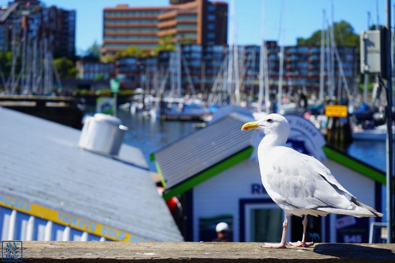 Le Chameau Bleu - Blog Voyage Vancouver Canada - Mouette de Granville Island - Vancouver