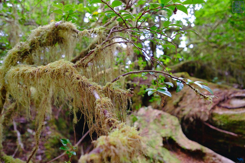 Le Chameau Bleu - Blog Voyage Tofino Ile de Vancouver - Végétation des forêts de Tofino - Ile de Vancouver Canada