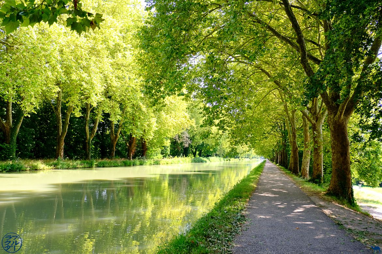 Le Chameau Bleu - Blog Voyage Canal des deux mers à Velo - Verdure sur le Canal des deux mers