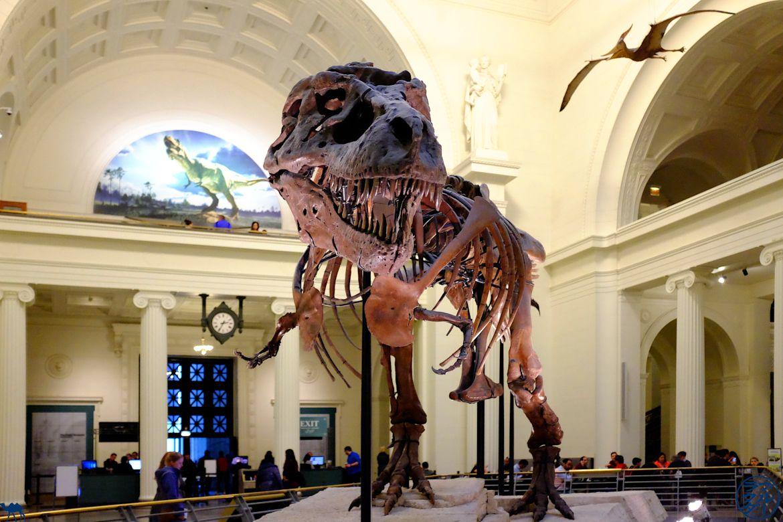 Le Chameau Bleu - Blog Voyage Chicago - Dinosaure au Field Museum