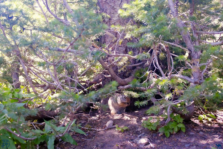Le Chameau Bleu - Blog Voyage Utah - Chipmunk de Cecret Lake