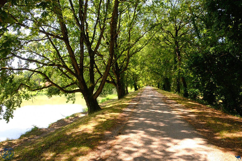 Le Chameau Bleu - Blog Vélo Le Canal des 2 mers - Bord du Canal des deux mers ombragé