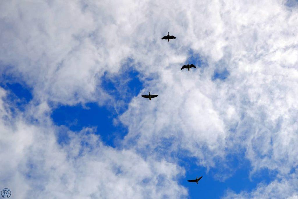 Le Chameau Bleu - Blog Voyage et Photos - Danemark - Le Vol des Oies Sauvages