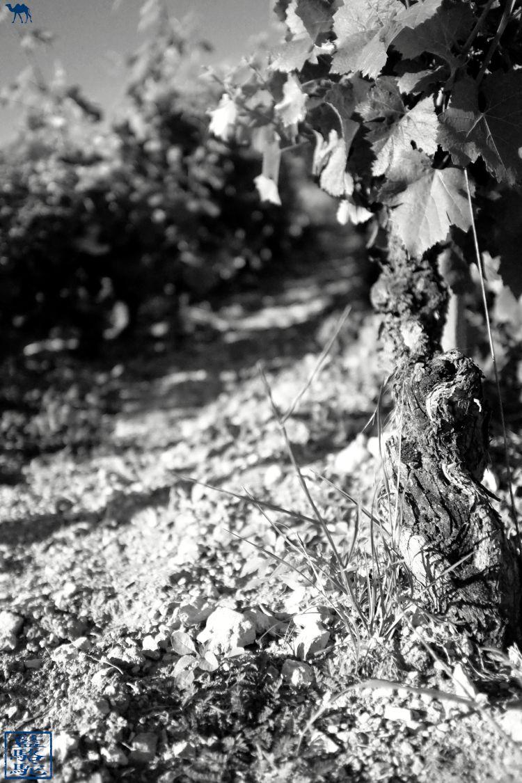 Le Chameau Bleu - Blog Voyage Bourgogne Santenay - Cep de vigne de Santenay - France