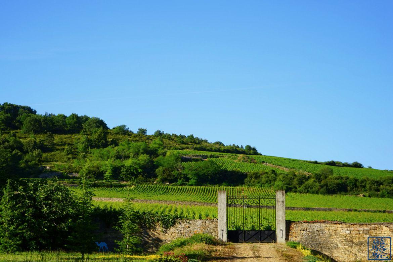 Le Chameau Bleu - Blog Voyage Bourgogne Santenay - Portail de vigne à Santenay