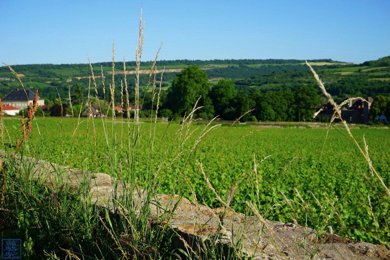 Le Chameau Bleu - Blog Voyage Santenay Bourgogne - vigne de Santenay