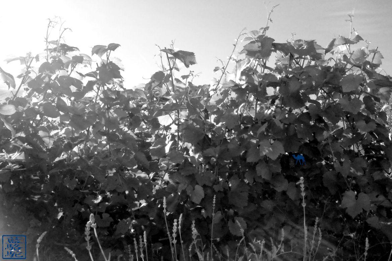 Le Chameau Bleu - Blog Voyage Santenay Bourgogne - Balade dans les vignes de Santenay