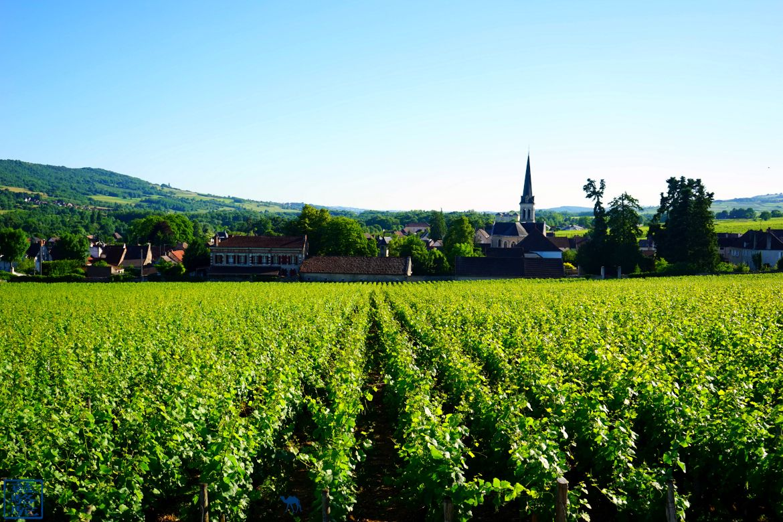 Le Chameau Bleu - Blog Voyage Bourgogne Santenay - Paysage de Vignes de Santenay