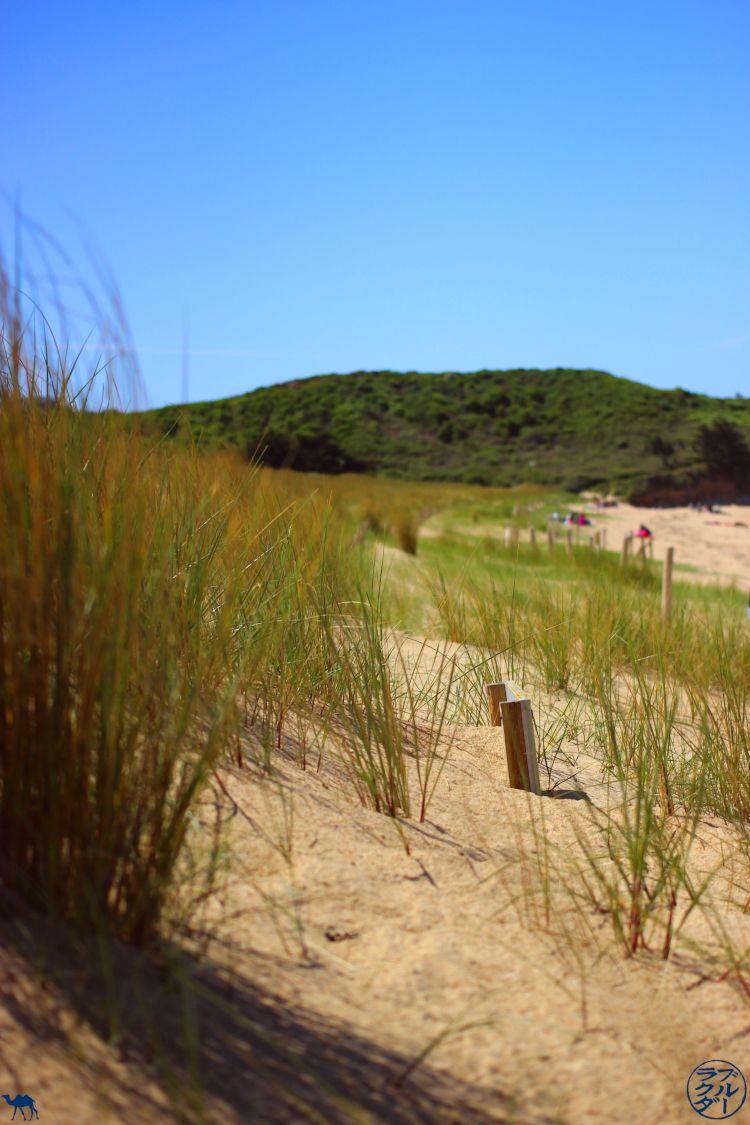 Le Chameau Bleu - Blog Voyage Bretagne - Les dunes de la plage des Chevrets - Bretagne Brittany France