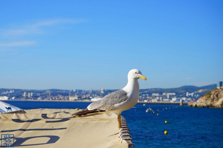 Le Chameau Bleu - Blog Voyage Méditerranée -MOUETTE A MARSEILLE