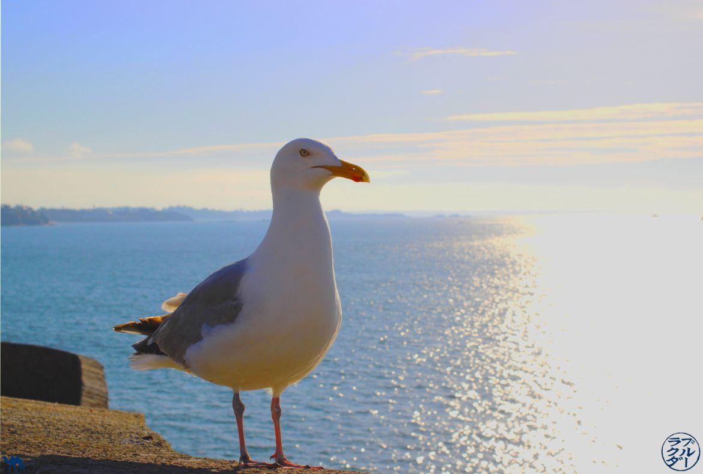 Le Chameau Bleu - Blog Voyage Saint Malo France - Notre ami la mouette sur les remparts - Saint Malo - Brittany Bretagne
