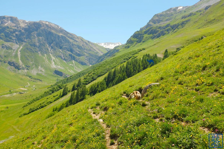 Le Chameau Bleu - Sentiers de Val d'isere Trail Randonnée en Savoie