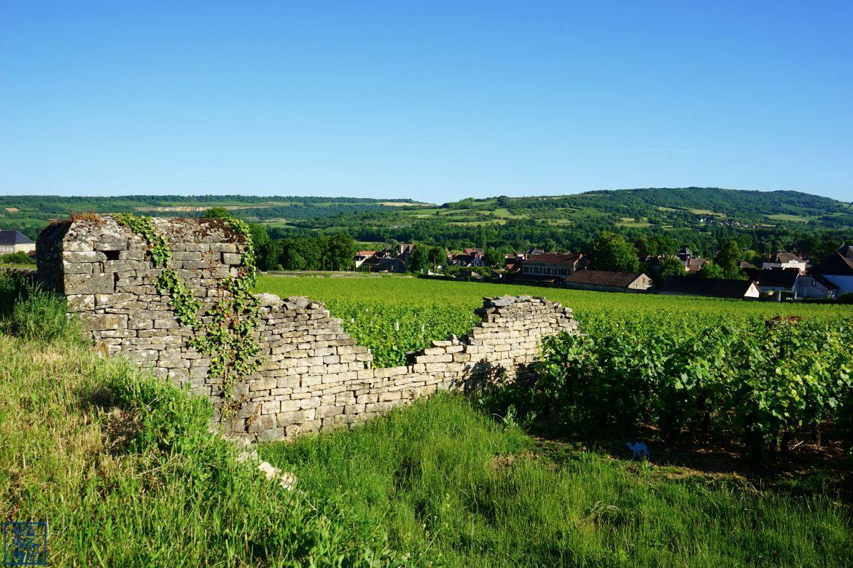Le Chameau Bleu - Blog Voyage Santenay Bourgogne - Promenade dans les vignes de Santenay