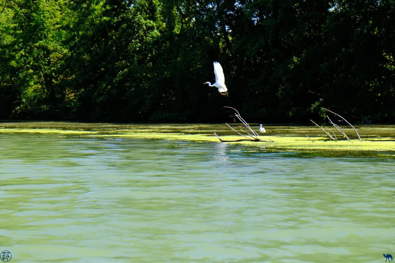Le Chameau Bleu - Blog Voyage et Gastronomie -  Héron à  Saint Nicolas de La Grave - Tarn Et Garonne
