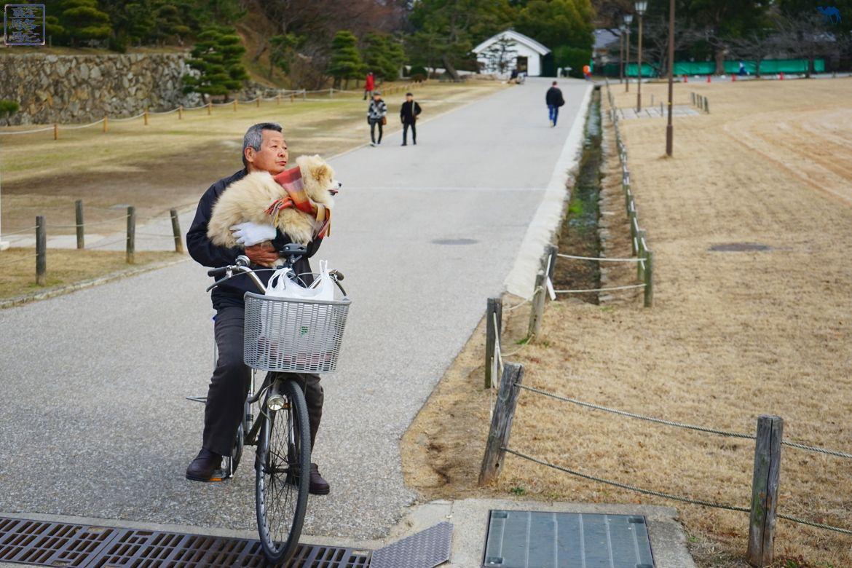 Le Chameau bleu - Blog Voyage Japon - Voyage au Japon - Kyoto - Akita et son maitre