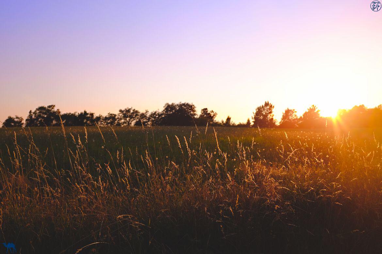 Le Chameau Bleu - Blog Voyage Lot Et Garonne - Coucher de soleil sur un champ