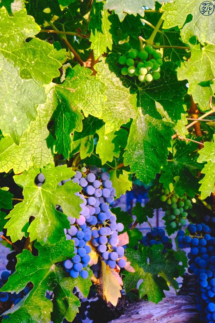 Le Chameau Bleu - Blog Voyage Napa Valley Californie - Raisin Californien