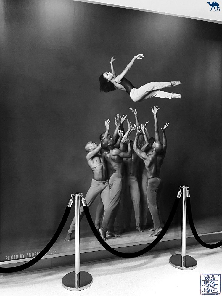 Le Chameau Bleu -Blog Voyage New York City - Sublime photo des danseurs de la compagnie Alvin Ailey New York