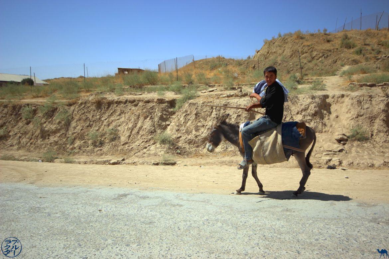 Le Chameau Bleu - Voyage En Ouzbékistan - Ane de Boysun