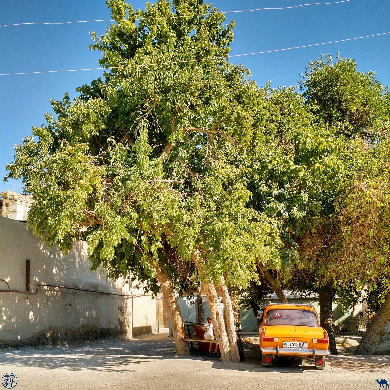 Le Chameau Bleu - Blog Voyage Ouzbékistan - Décor Ouzbek de Boukhara- Ouzbekistan