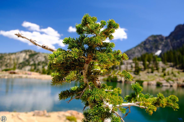 Le Chameau Bleu - Blog Voyage Randonnée dans l'Utah - Pin de Cecret Lake