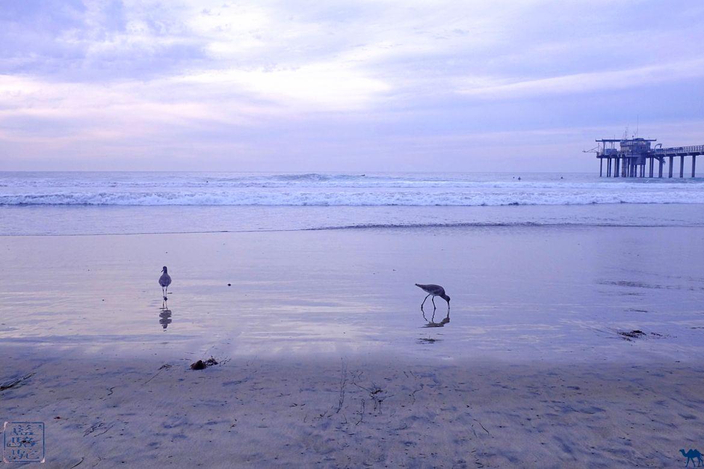 Le Chameau Bleu- Blog voyage - Californie du Sud-sandpiper