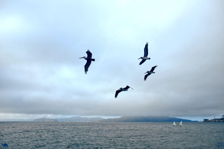 Le Chameau Bleu - Blog Voyage à San Francisco - Albatros