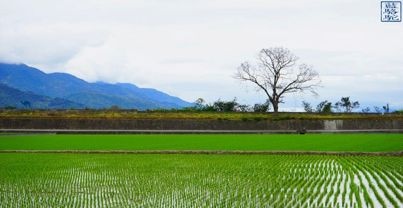 Le Chameau Bleu - Blog Voyage Taiwan - Mont et Riziere - Voyage a Taiwan - Promenade dans les rizieres
